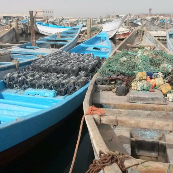 Compétitivité-halieutique-Nouadhibou