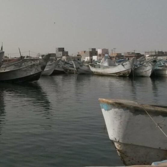 Odyssée-Développement-Nouakchott-Mauritanie (2)