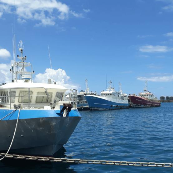 Oydssée-Développement-Polynésie-Française