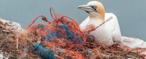 Déchets-plastiques-activités-maritimes-FranceAgriMer